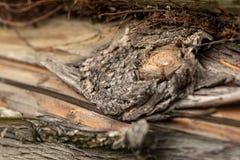 Επιφάνεια του παλαιού κορμού πεύκων Κούτσουρο πεύκων Όμορφος κόμβος πεύκων Κινηματογράφηση σε πρώτο πλάνο ενός κορμού πεύκων στοκ φωτογραφία