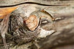 Επιφάνεια του παλαιού κορμού πεύκων Κούτσουρο πεύκων Όμορφος κόμβος πεύκων Κινηματογράφηση σε πρώτο πλάνο ενός κορμού πεύκων στοκ φωτογραφία με δικαίωμα ελεύθερης χρήσης