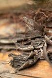 Επιφάνεια του παλαιού κορμού πεύκων Κούτσουρο πεύκων Όμορφος κόμβος πεύκων Κινηματογράφηση σε πρώτο πλάνο ενός κορμού πεύκων στοκ εικόνες με δικαίωμα ελεύθερης χρήσης