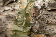 Επιφάνεια του παλαιού κορμού πεύκων Κούτσουρο πεύκων Όμορφος κόμβος πεύκων Κινηματογράφηση σε πρώτο πλάνο ενός κορμού πεύκων στοκ εικόνα με δικαίωμα ελεύθερης χρήσης