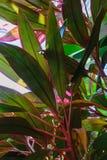 Επιφάνεια υποβάθρου των πράσινων και κόκκινων εξωτικών τροπικών εγκαταστάσεων στοκ εικόνες