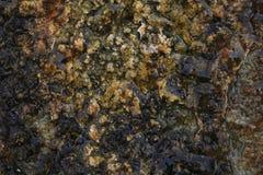 επιφάνεια ψαμμίτη υγρή Στοκ Εικόνες