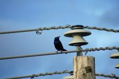 επιχαλκωμένο ηλεκτρικό &kap Στοκ φωτογραφία με δικαίωμα ελεύθερης χρήσης