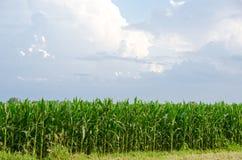 Επιχείρηση τομέων αγροτικού καλαμποκιού χώρας Στοκ φωτογραφία με δικαίωμα ελεύθερης χρήσης