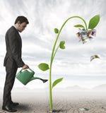 Επιχειρηματίας και ένα φυτό των χρημάτων Στοκ εικόνα με δικαίωμα ελεύθερης χρήσης