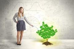 Επιχειρησιακή γυναίκα που ποτίζει ένα δέντρο σημαδιών δολαρίων ανάπτυξης πράσινο Στοκ Εικόνα