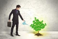 Επιχειρησιακό άτομο που ποτίζει ένα δέντρο σημαδιών δολαρίων ανάπτυξης πράσινο Στοκ εικόνα με δικαίωμα ελεύθερης χρήσης