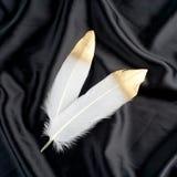 Επιχρυσωμένο πολυτέλεια χρυσό χρυσό άσπρο φτερό κύκνων στο μαύρο υπόβαθρο υφασμάτων μεταξιού Στοκ Φωτογραφία