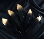 Επιχρυσωμένο πολυτέλεια χρυσό χρυσό μαύρο φτερό κύκνων στο υπόβαθρο υφασμάτων μεταξιού Στοκ φωτογραφίες με δικαίωμα ελεύθερης χρήσης
