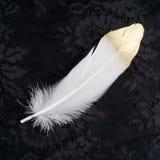 Επιχρυσωμένο χρυσό χρυσό και άσπρο φτερό που απομονώνεται στο μαύρο υπόβαθρο δαντελλών Στοκ Φωτογραφία
