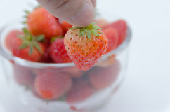 Επιλέξτε τις φράουλες σε ένα κύπελλο Στοκ φωτογραφία με δικαίωμα ελεύθερης χρήσης