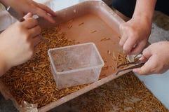 Επιλέξτε το σκουλήκι: πάρτε το νεκρό σκουλήκι Στοκ εικόνα με δικαίωμα ελεύθερης χρήσης