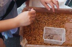 Επιλέξτε το σκουλήκι: πάρτε το νεκρό σκουλήκι Στοκ Εικόνα