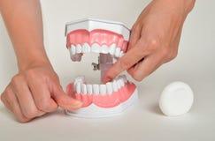Επιδεικνύοντας πώς να χρησιμοποιήσει το νήμα, οδοντική έννοια προσοχής Στοκ Εικόνα