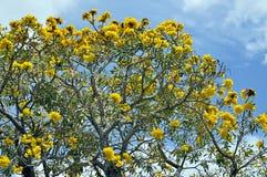 επιδεικτικό δέντρο Στοκ Εικόνες
