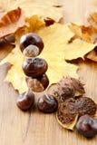 Επιδιορθώστε λίγο κάστανο λογαριάζει auf τα καρύδια και τα φύλλα Στοκ Εικόνα