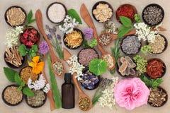 Επιλογή λουλουδιών και χορταριών Στοκ φωτογραφία με δικαίωμα ελεύθερης χρήσης