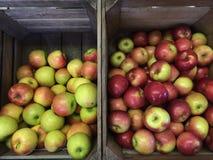 Επιλογή της Apple Στοκ εικόνες με δικαίωμα ελεύθερης χρήσης