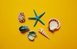 Επιλογή των θαλασσινών κοχυλιών και του αστερία Στοκ Εικόνες