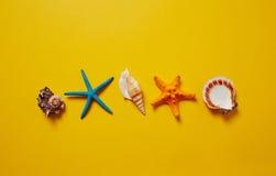 Επιλογή των θαλασσινών κοχυλιών και του αστερία Στοκ Εικόνα