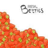 Επιλογή των φρέσκων φραουλών ελεύθερη απεικόνιση δικαιώματος