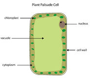 Επονομαζόμενο διάγραμμα του κυττάρου περιφραγμάτων εγκαταστάσεων Στοκ Εικόνες