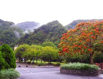 Εποχή άνοιξης στο βουνό Ταϊβάν στοκ εικόνες
