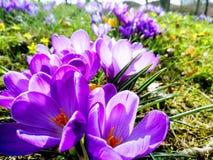 Εποχή λουλουδιών Στοκ εικόνα με δικαίωμα ελεύθερης χρήσης