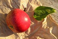 Εποχή μήλων Στοκ εικόνα με δικαίωμα ελεύθερης χρήσης