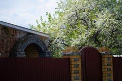 Εποχή πλήρους άνθισης λουλουδιών ανθών Sakura ή κερασιών την άνοιξη Όμορφο ανθίζοντας δέντρο κερασιών στοκ εικόνα