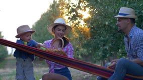 Εποχή συγκομιδών, νέοι οικογενειακοί αγρότες στα καπέλα αχύρου και πουκάμισα καρό που παίζουν τα μήλα με το μικρό γιο στην αιώρα  απόθεμα βίντεο