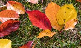 Εποχή των όμορφων φύλλων φθινοπώρου Στοκ εικόνες με δικαίωμα ελεύθερης χρήσης