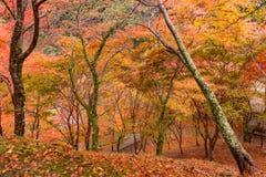 Εποχή φθινοπώρου του Κιότο Στοκ Φωτογραφία
