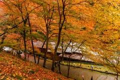 Εποχή φθινοπώρου του Κιότο Στοκ εικόνες με δικαίωμα ελεύθερης χρήσης