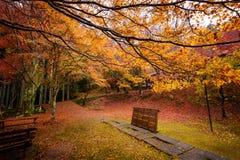Εποχή φθινοπώρου του Κιότο Στοκ Εικόνες