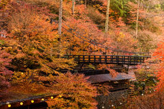 Εποχή φθινοπώρου του Κιότο Στοκ φωτογραφίες με δικαίωμα ελεύθερης χρήσης