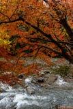 Εποχή φθινοπώρου του Κιότο Στοκ Εικόνα