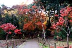 Εποχή φυλλώματος στην Ιαπωνία Στοκ Εικόνα