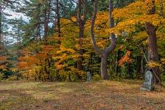 Εποχή χρώματος φθινοπώρου γύρω από Josen-josen-ji Στοκ Φωτογραφίες