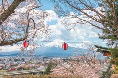 Εποχή sakura ανθών κερασιών την άνοιξη και ΑΜ fuji στο μπλε Στοκ Εικόνες