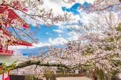 Εποχή sakura ανθών κερασιών την άνοιξη με την κόκκινη παγόδα στο πάρκο και την ΑΜ Υπόβαθρο του Φούτζι Στοκ Εικόνες