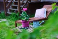 εποχιακή έννοια εργασίας θερινών κήπων Λουλούδι γερανιών στο δοχείο, το καπέλο και τα εργαλεία Στοκ Φωτογραφίες