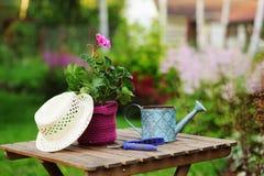εποχιακή έννοια εργασίας θερινών κήπων Λουλούδι γερανιών στο δοχείο, το καπέλο και τα εργαλεία στον ξύλινο πίνακα Στοκ Φωτογραφίες