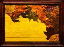 Εποχιακή έννοια σύνθεσης Ζωηρόχρωμα φύλλα φθινοπώρου στην ξύλινη σύσταση στο πλαίσιο Ο σφένδαμνος και το δρύινο ξηρό φύλλο βάζουν Στοκ Εικόνα
