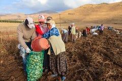 Εποχιακοί εργαζόμενοι γυναικών στοκ φωτογραφίες με δικαίωμα ελεύθερης χρήσης