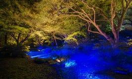 Εποχιακοί φωτισμοί στον κήπο Rikugien, Τόκιο, Ιαπωνία στοκ εικόνες