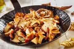 Εποχιακό μαγείρεμα φθινοπώρου με τα φρέσκα μανιτάρια Στοκ εικόνα με δικαίωμα ελεύθερης χρήσης