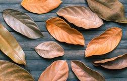 Εποχιακό πρότυπο εμβλημάτων φθινοπώρου Παλαιά ξηρά διακόσμηση φύλλων στον ξύλινο πίνακα Στοκ φωτογραφίες με δικαίωμα ελεύθερης χρήσης