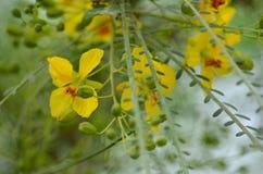 λεπτά λουλούδια κίτρινα Στοκ Εικόνα