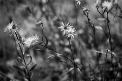 λεπτά λουλούδια Στοκ φωτογραφίες με δικαίωμα ελεύθερης χρήσης